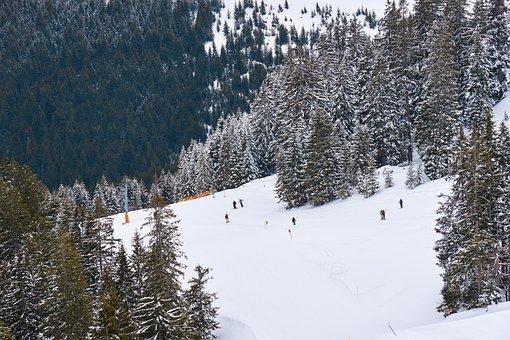 Ski, Runway, Toboggan, Vacations, Winter, Mountains