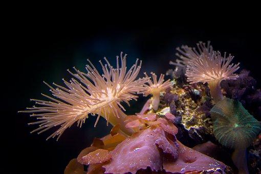 Coral, Underwater, Diving, Sea, Ocean, Reef, Water