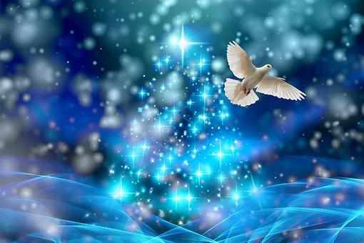 Christmas, Dove, Lights, Fir Tree, Snow, Winter