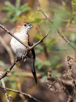 Beautiful, Bird, Nature, Bangladesh
