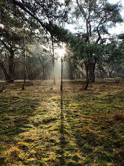 Nature, Forest, Sun Rays