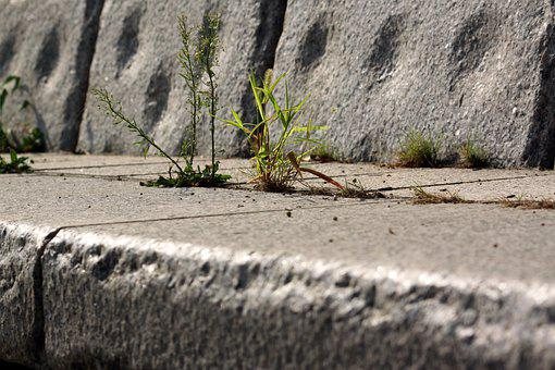 Foxtail, Nature, Wildflower, Stone Wall, Stairs, Pool