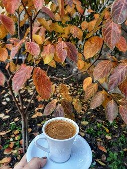 Turkish Coffee, Autumn, Cup, Nature, Garden