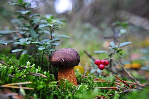 Mushroom, Forest, Moss, Autumn, Mushrooms, Macro