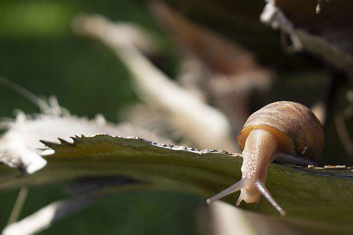 Snail, Slow, Baba, Slimy, Plant, Natural, Nature