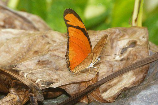 Butterfly, Orange, Insect, Nature, Colorful, Wings