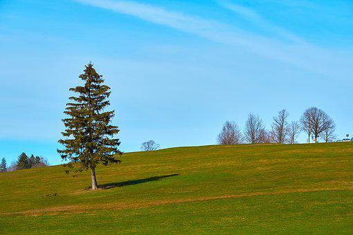 Tree, Meadow, Green, Sun, Blue, Sky, Background, Lonely