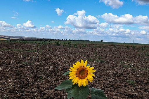Fields, Sunflower, Plowing, Autumn, Culture, Sowing