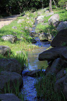 Creek, Streams, Nature, Forest, Trails, Stream