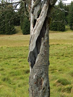 Nature, Tree, Hollow, Tribe, Log, Landscape