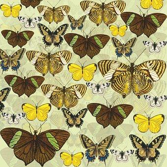 Butterflies, Yellow, Scrapbook Background, Butterfly