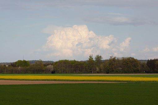 Oilseed Rape, Agricultural Operation, Yellow, Field