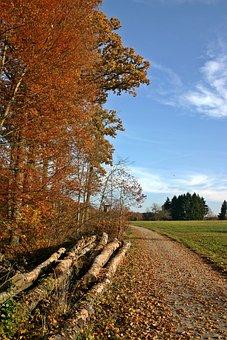 Forest, Autumn, Nature, Trees, Autumn Forest, Landscape