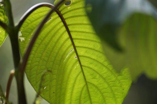 Plant, Leaf, Tr, Green, Flower, Branch, Garden, Leaves