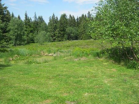 Meadow, Edge Of The Woods, Glade, Hiking, Wide