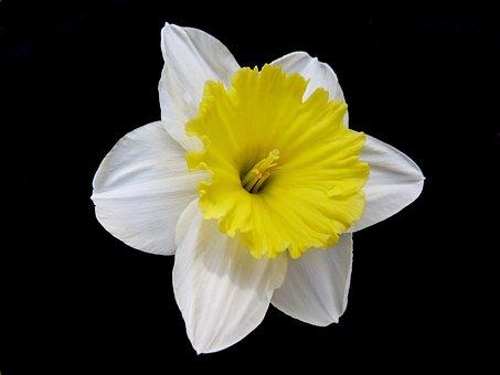 Flowers, Macro, Nature, Spring, Star, Yellow, White