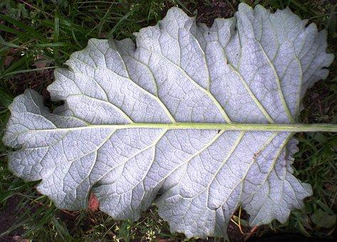 Leaf, Nature, Fractal, Geometry, Gray