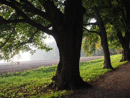 Tree, Avenue, Backlighting, Sun, Field, Away, Sky