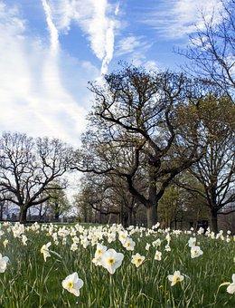 Daffodil, Flower, Bed, Spring, Landscape, Easter, Green
