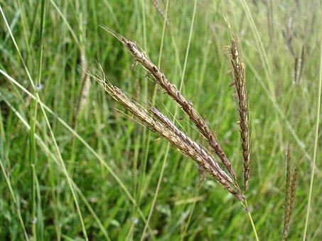 Grass, Stem, Green, Zoom, Foreground, Stems, Plant