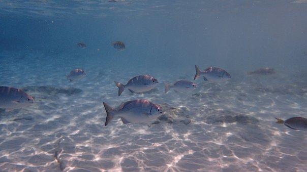 Fish, Underwater, Cozumel