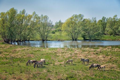 Wild Horses, Horses, Animals, Ride, Nature, Freilebend