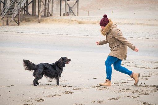 Woman, Dog, Winter, Autumn, Beach, Pet, Human, Animal