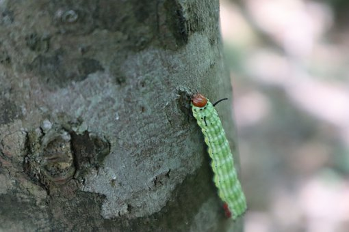 Nature, Caterpillar, Tree, Insect, Butterfly, Larva