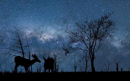 Nature, Sky, Astronomy, Star, Galaxy, Dark, Cosmos