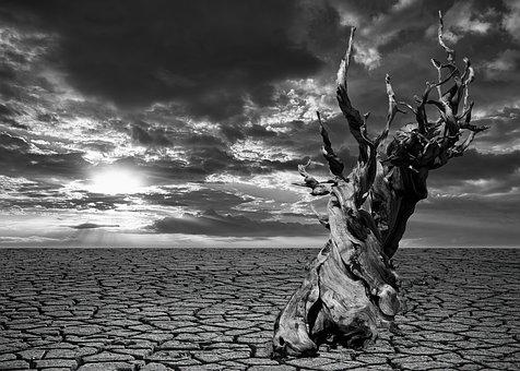 Drought, Earth, Dry, Desert, Nature, Soil, Texture