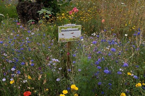 Flower Meadow, Flowers, Ecologically, Meadow, Garden
