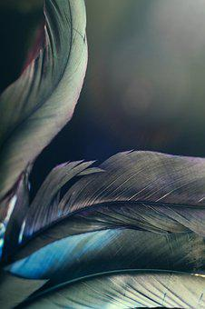 Feather, Sensuality, Fantasy, New Age, Dream, Beauty