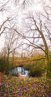 Creepy, Pond, Winter, Woods, Nature, Haze, Fog