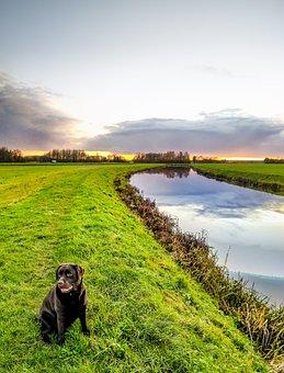 Dog, River, Landscape, Sit, Labrador, Sweet, Nature