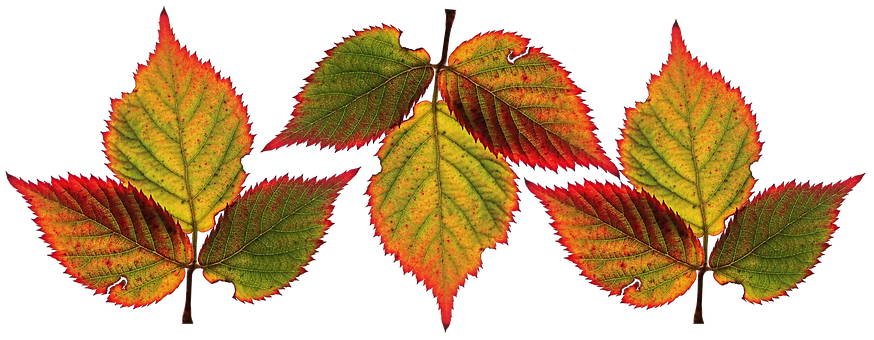 Leaves, Berry, Autumn, Veins, Colorful, Cut Out