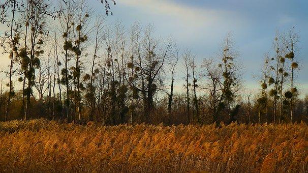 Grasses, Mistletoe, Tree, Nature, Castle Park, Sky