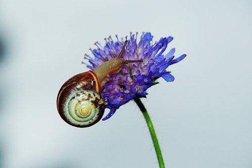 Zaroślarka Total, Molluscum, Flower, Forest, Spiral