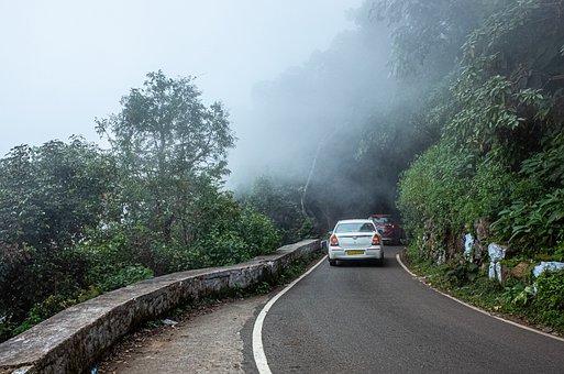 Morning, Fog, Mystical, Mood, Late Summer, Forest Path