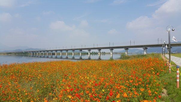 Nakdong River, Ktx, Flowers, Riverside, Yellow Flower