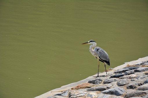 Bird, River, Riverside, Lake, Nature, Outdoor, Wildlife