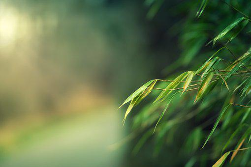 Bamboo, Bokeh, Sun, Away, Background, Vintage, Retro