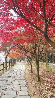 Gold Mountain, Autumn, Autumn Leaves, Trail, Esplanade