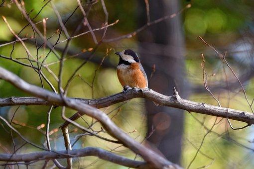 Animal, Forest, Green, Wood, Sunbeams, Bird, Wild Birds