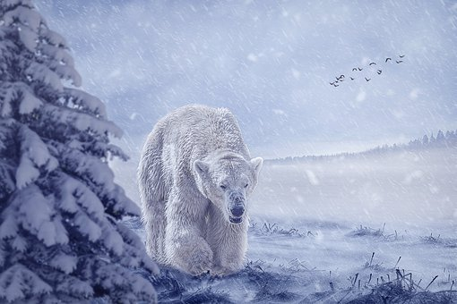 Manipulation, Polar Bear, Bear, Animal, Winter, Snow