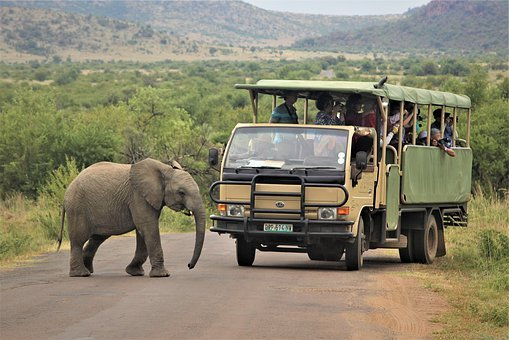 Baby, African, Elephant, Crossing, Road, Tourists