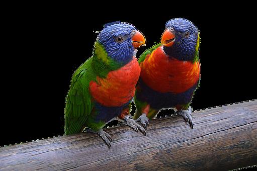Parrot, Bird, Ara, Animal, Isolated, Plumage