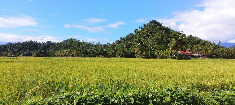 Philippines, Rice, Fields, Bananas, Mountains