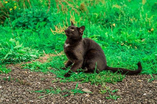 Cat, Black, Superstition, Hunts, Play, Fun, Portrait