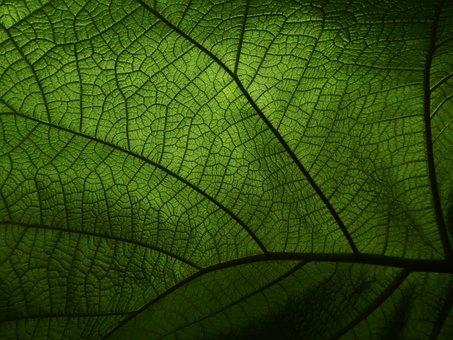 Green, Veins, Leaf, Plant, Pattern, Greenery, Ecology