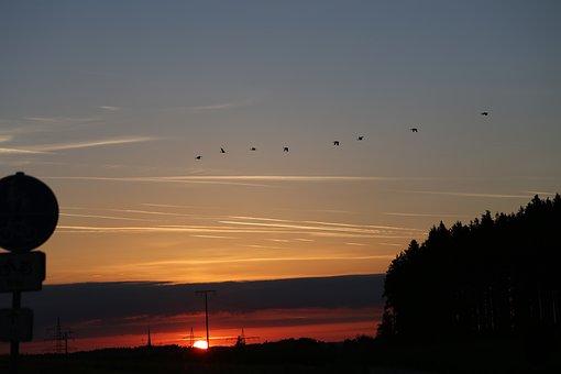 Sky, Evening, Birds, Sun, Color, Evening Sky